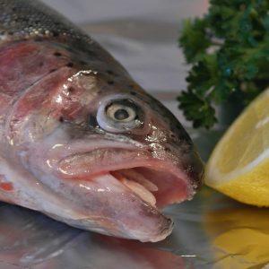 salmon-trout-540936_1920